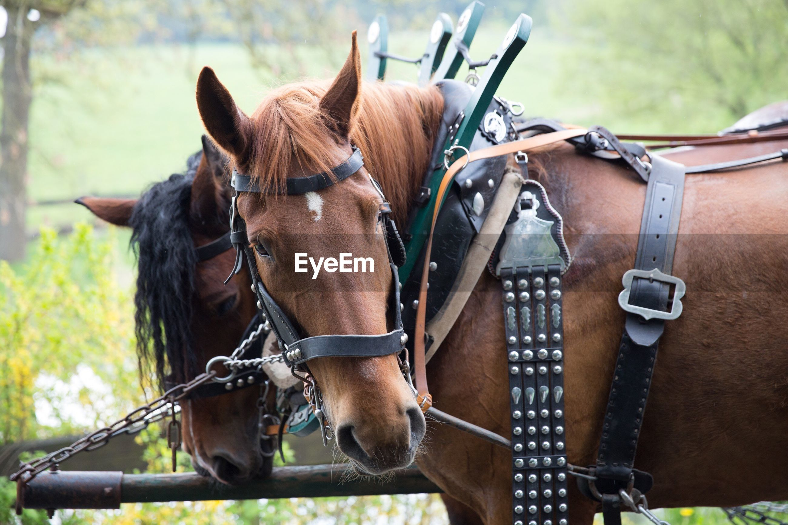HORSE CART IN RANCH AGAINST BLURRED BACKGROUND