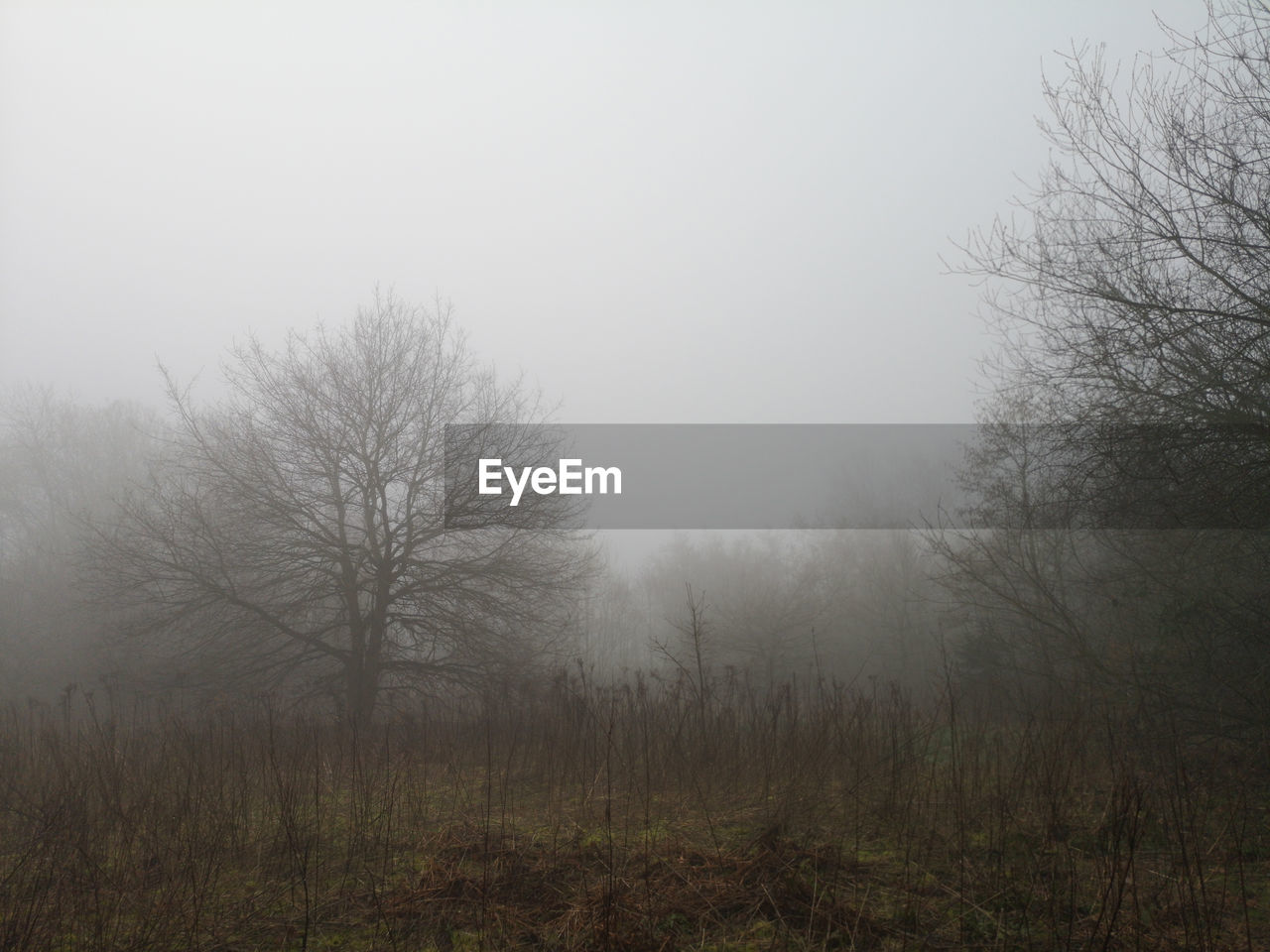 fog, plant, tree, land, tranquility, beauty in nature, sky, tranquil scene, nature, bare tree, environment, landscape, no people, hazy, non-urban scene, field, scenics - nature, forest, day, outdoors