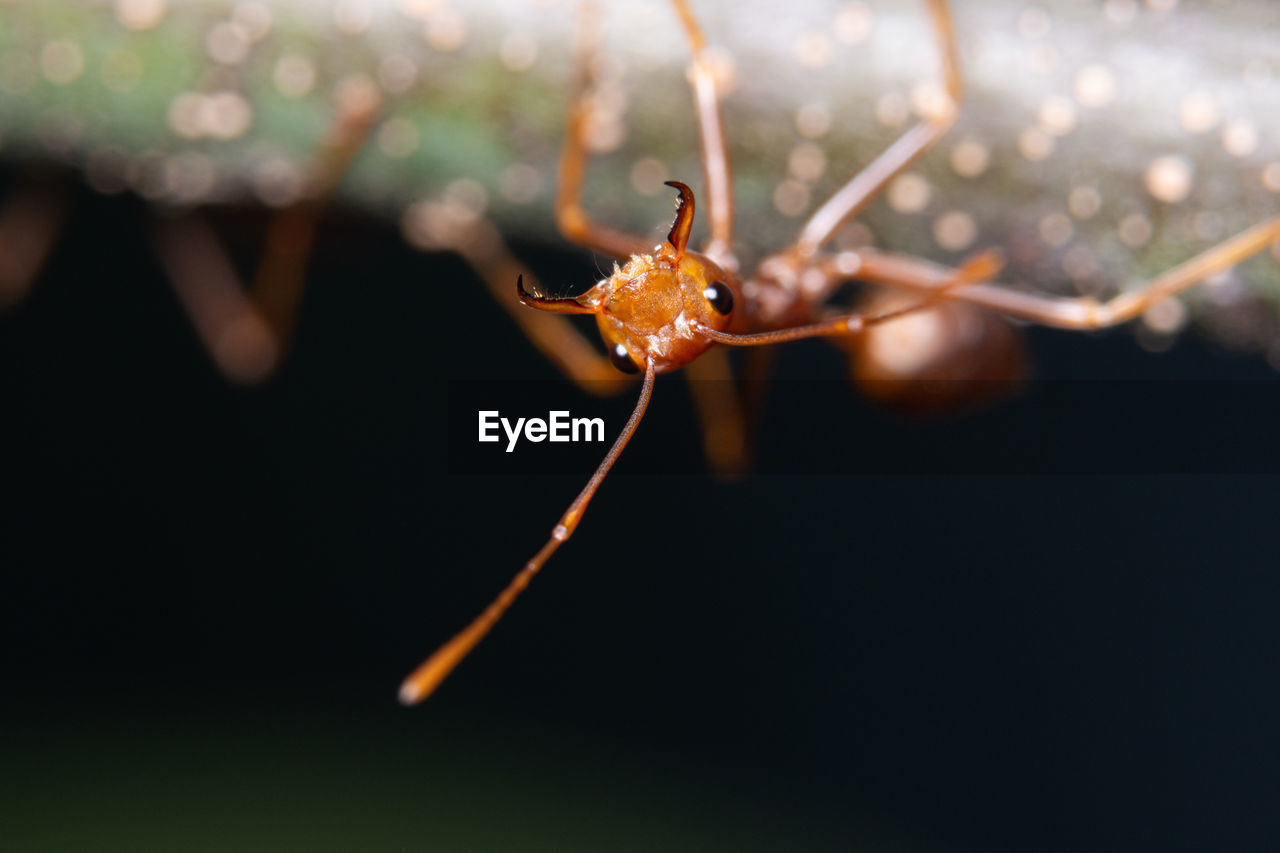 close-up, insect, invertebrate, focus on foreground, one animal, animal themes, animals in the wild, no people, animal wildlife, selective focus, animal, nature, arthropod, fragility, orange color, day, vulnerability, outdoors, animal body part, beauty in nature