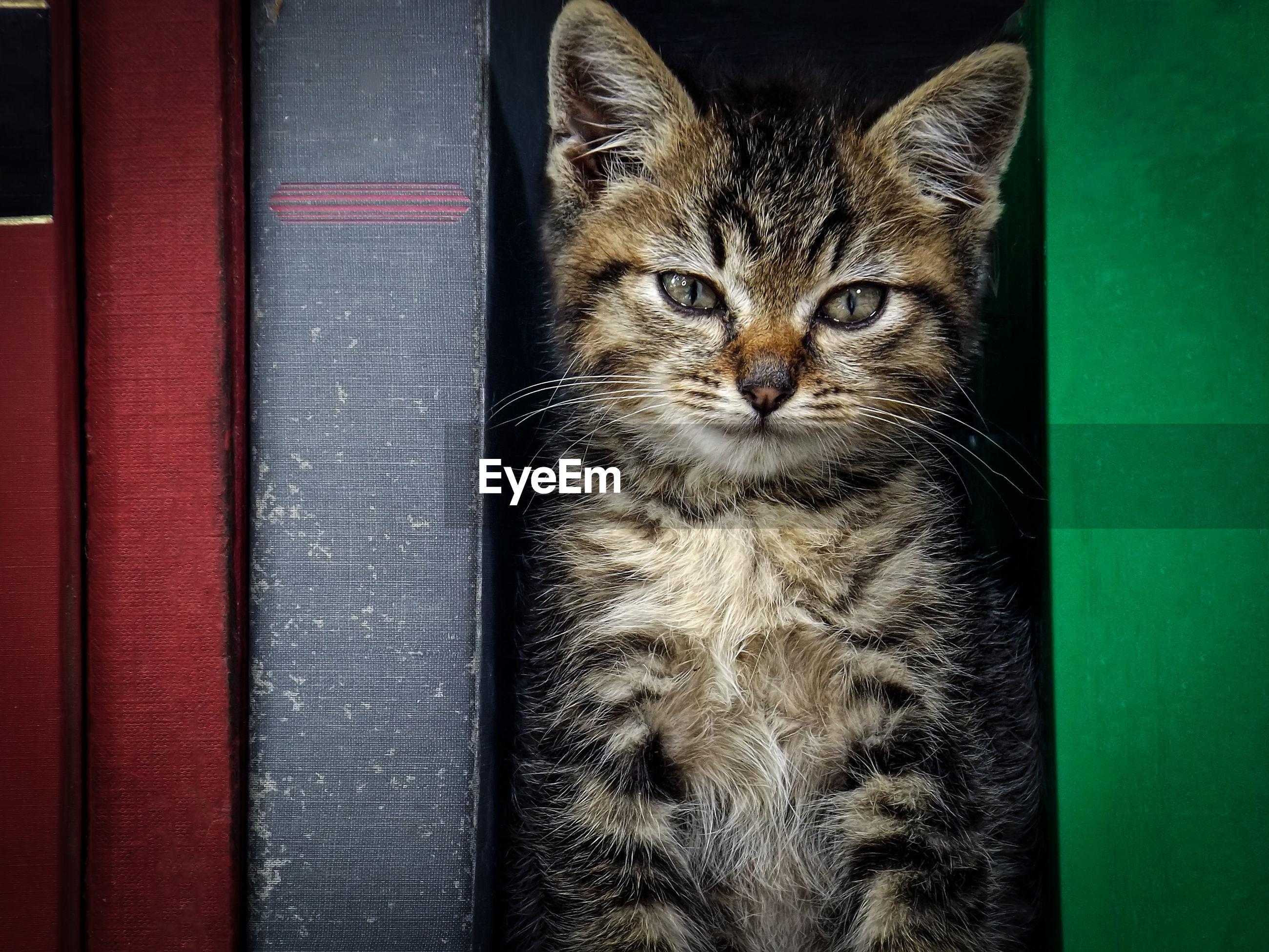 Portrait of cat amidst books