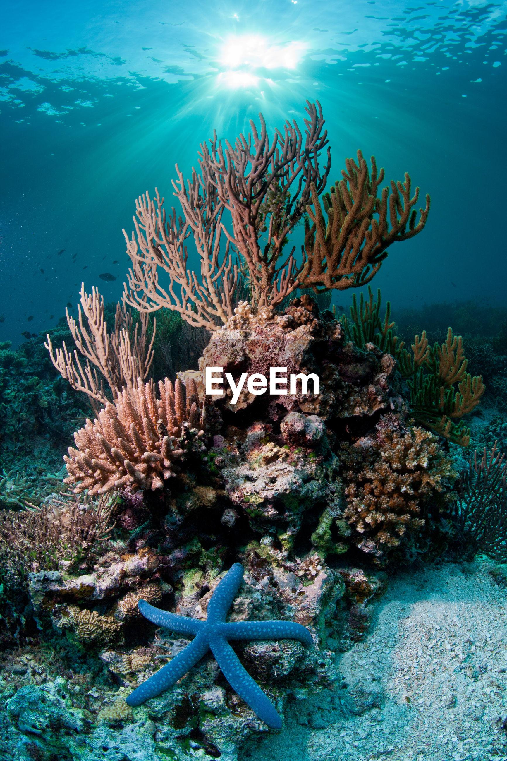 Starfish next to corals underwater