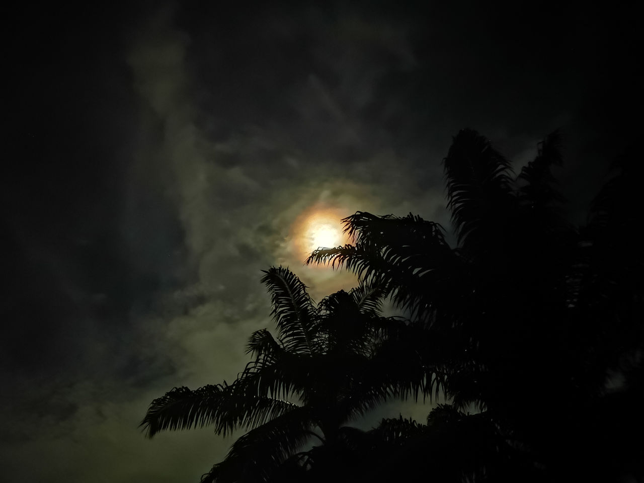 sky, palm tree, tree, tropical climate, silhouette, cloud - sky, beauty in nature, plant, low angle view, tranquility, nature, no people, growth, scenics - nature, sunset, tranquil scene, outdoors, night, idyllic, dark, palm leaf, coconut palm tree, moonlight