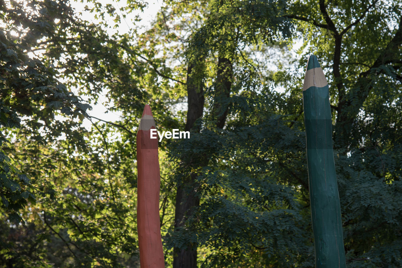 tree, growth, outdoors, low angle view, forest, nature, tree trunk, day, no people, sky