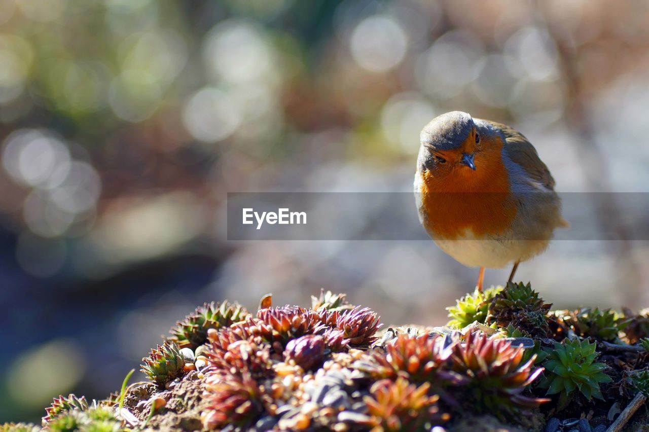 Close-Up Of Robin Perching On Plants