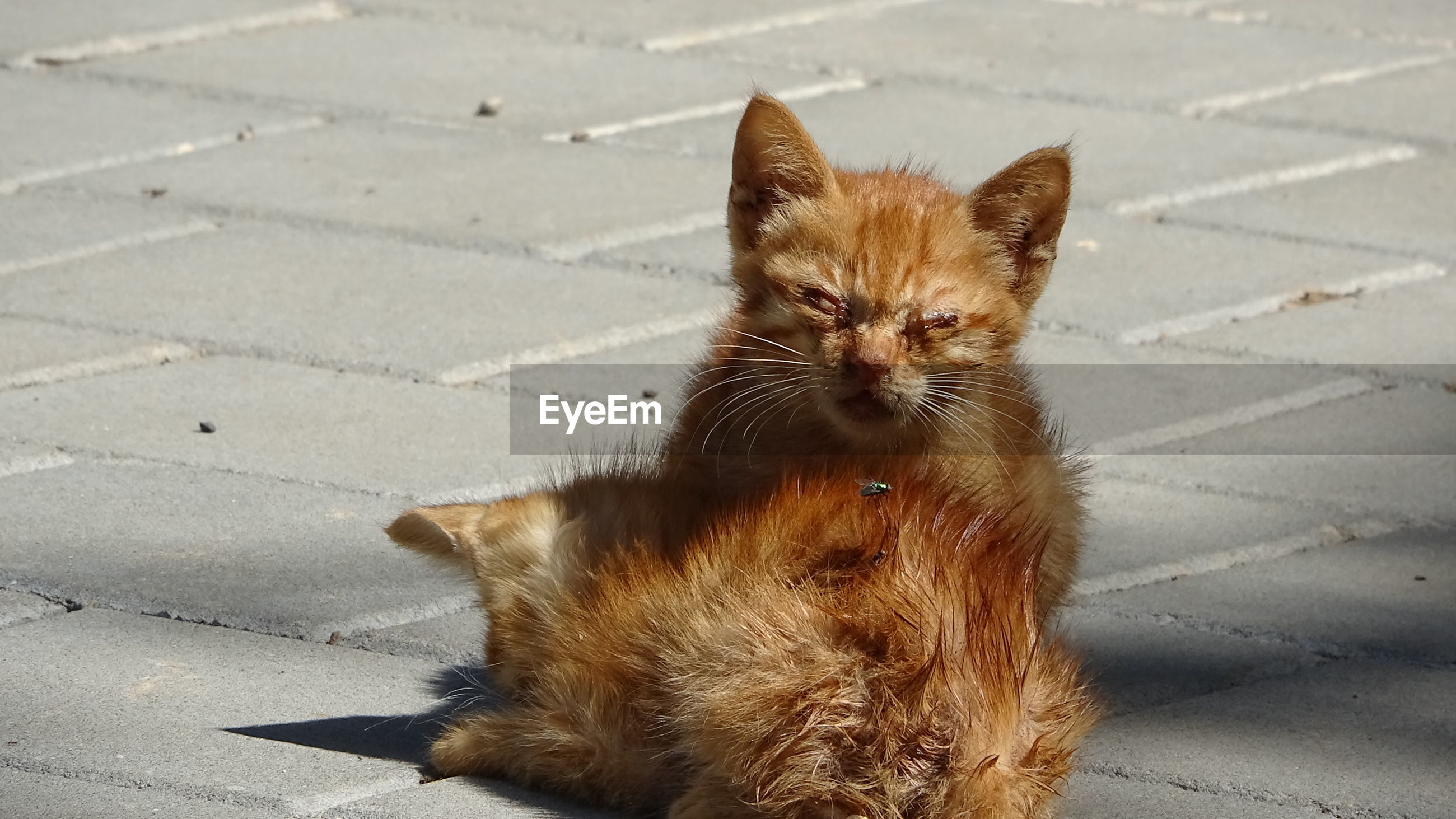 PORTRAIT OF CAT RELAXING ON FOOTPATH BY STREET