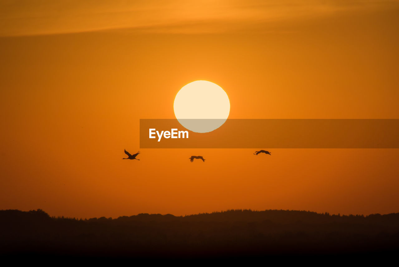 sunset, orange color, silhouette, flying, nature, beauty in nature, animal themes, bird, animals in the wild, sun, scenics, sky, outdoors, animal wildlife, tranquil scene, mid-air, tranquility, no people, yellow, low angle view, spread wings, tree, mammal, day