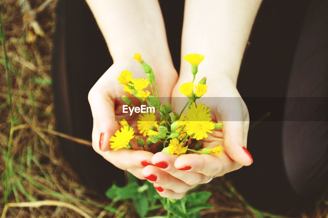 Cropped hands of woman holding yellow flowers