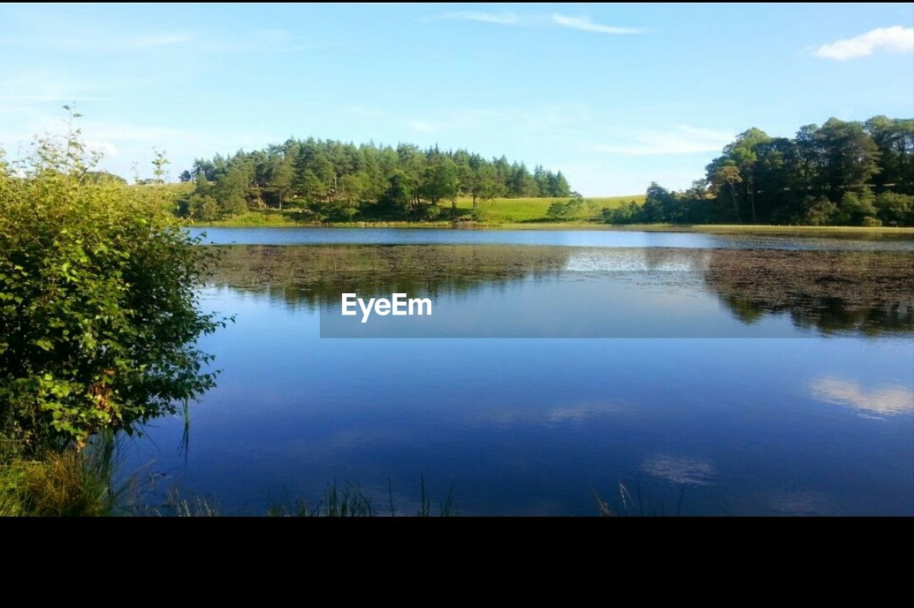 tree, sky, lake, nature, water, reflection, tranquility, tranquil scene, scenics, no people, beauty in nature, growth, day, outdoors, cloud - sky, blue, landscape