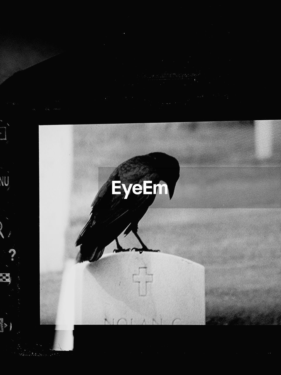 bird, one animal, animal themes, animals in the wild, no people, perching, day, outdoors, close-up, raven - bird, nature