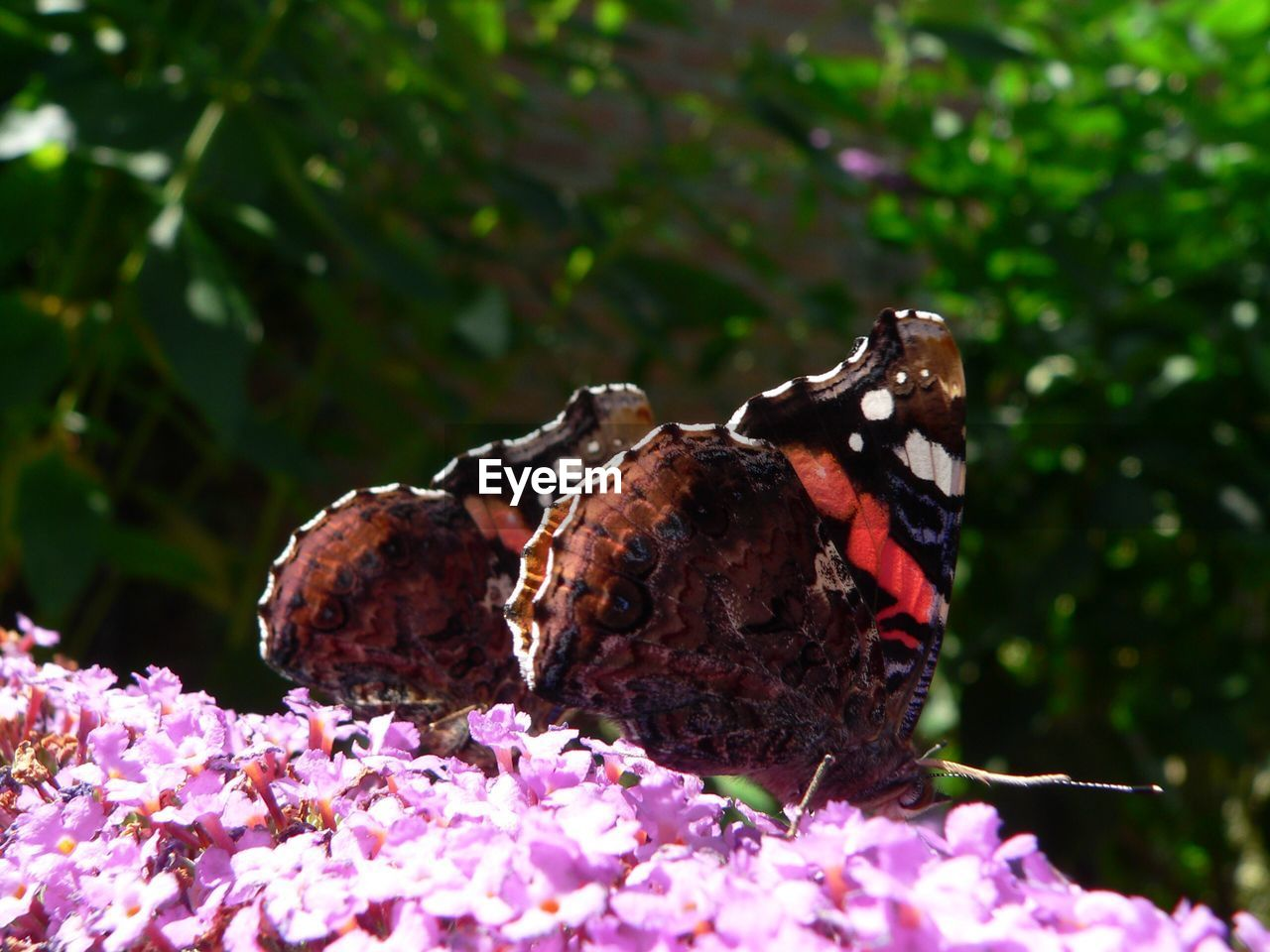 animal themes, nature, flower, animals in the wild, butterfly - insect, no people, outdoors, insect, fragility, day, beauty in nature, animal wildlife, plant, growth, focus on foreground, one animal, close-up, freshness