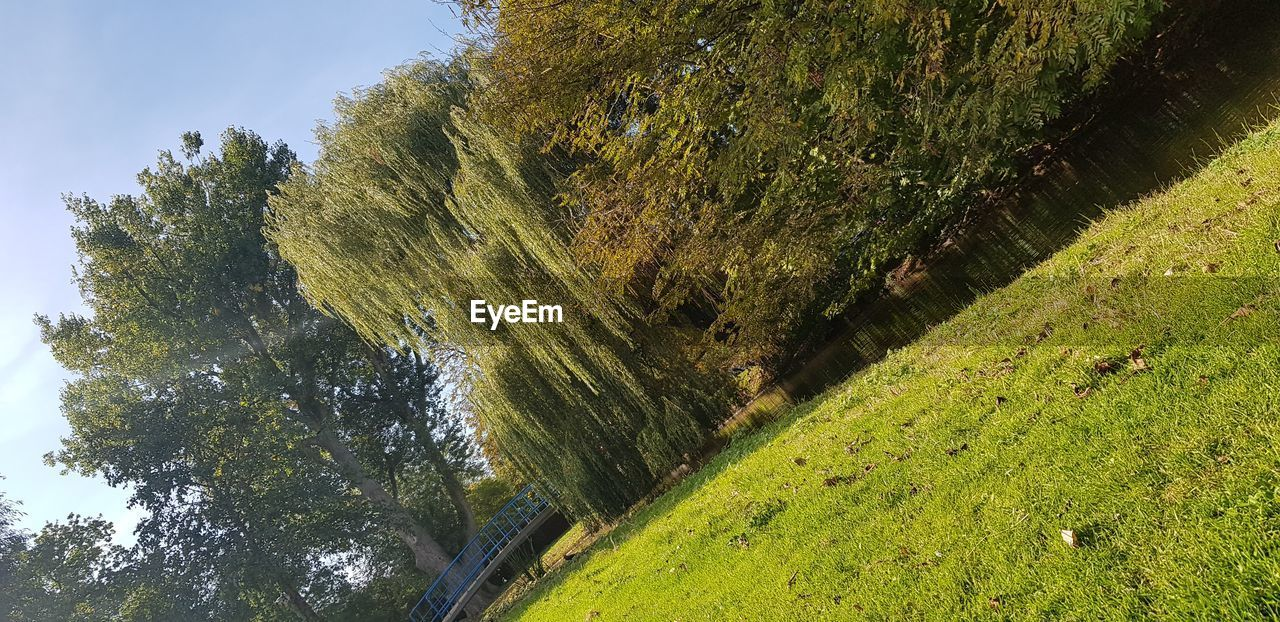 plant, tree, green color, beauty in nature, tranquility, growth, tranquil scene, scenics - nature, no people, nature, day, land, grass, non-urban scene, outdoors, sky, sunlight, environment, forest, idyllic