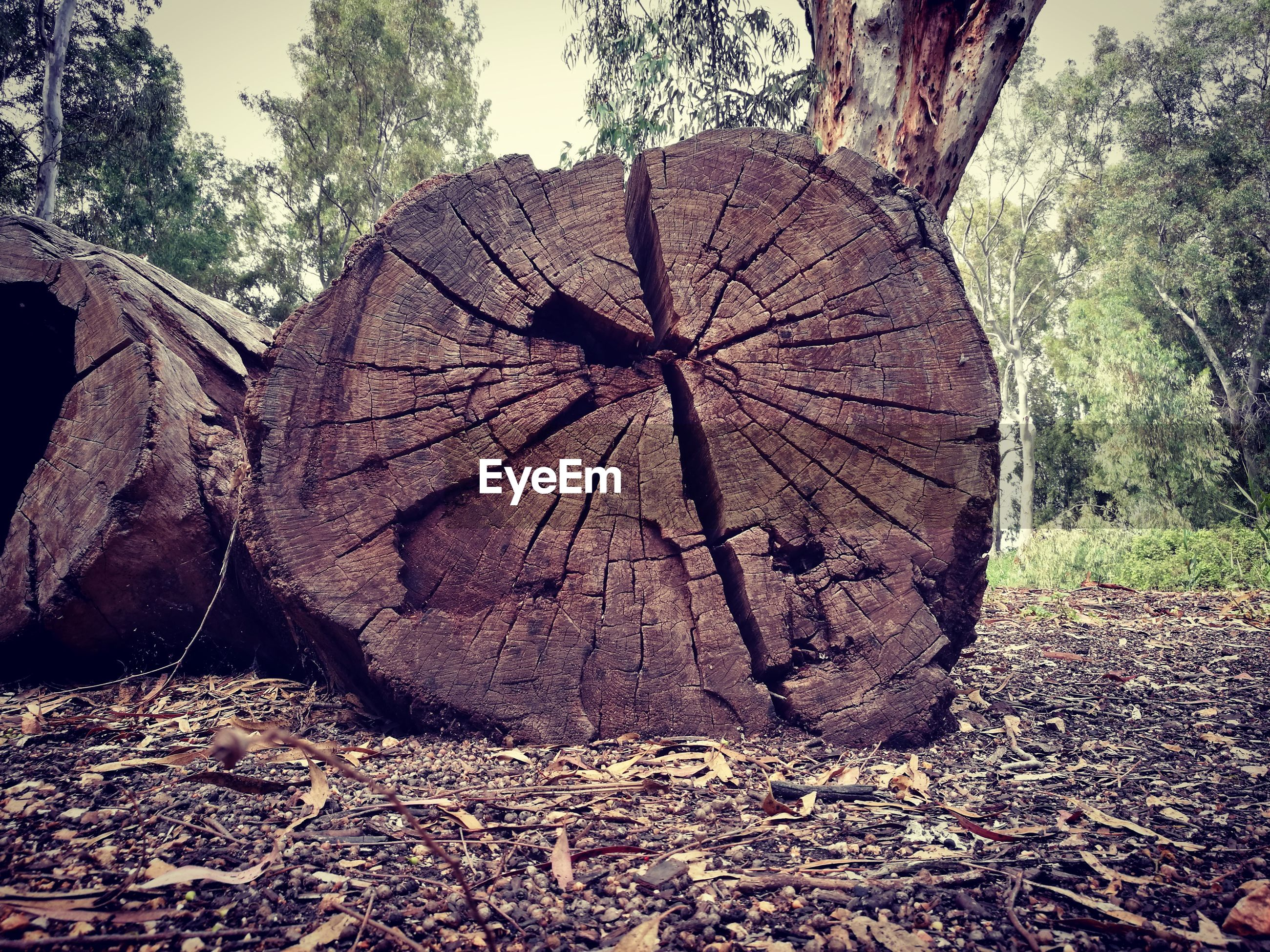 Close-up of tree stump on land in forest