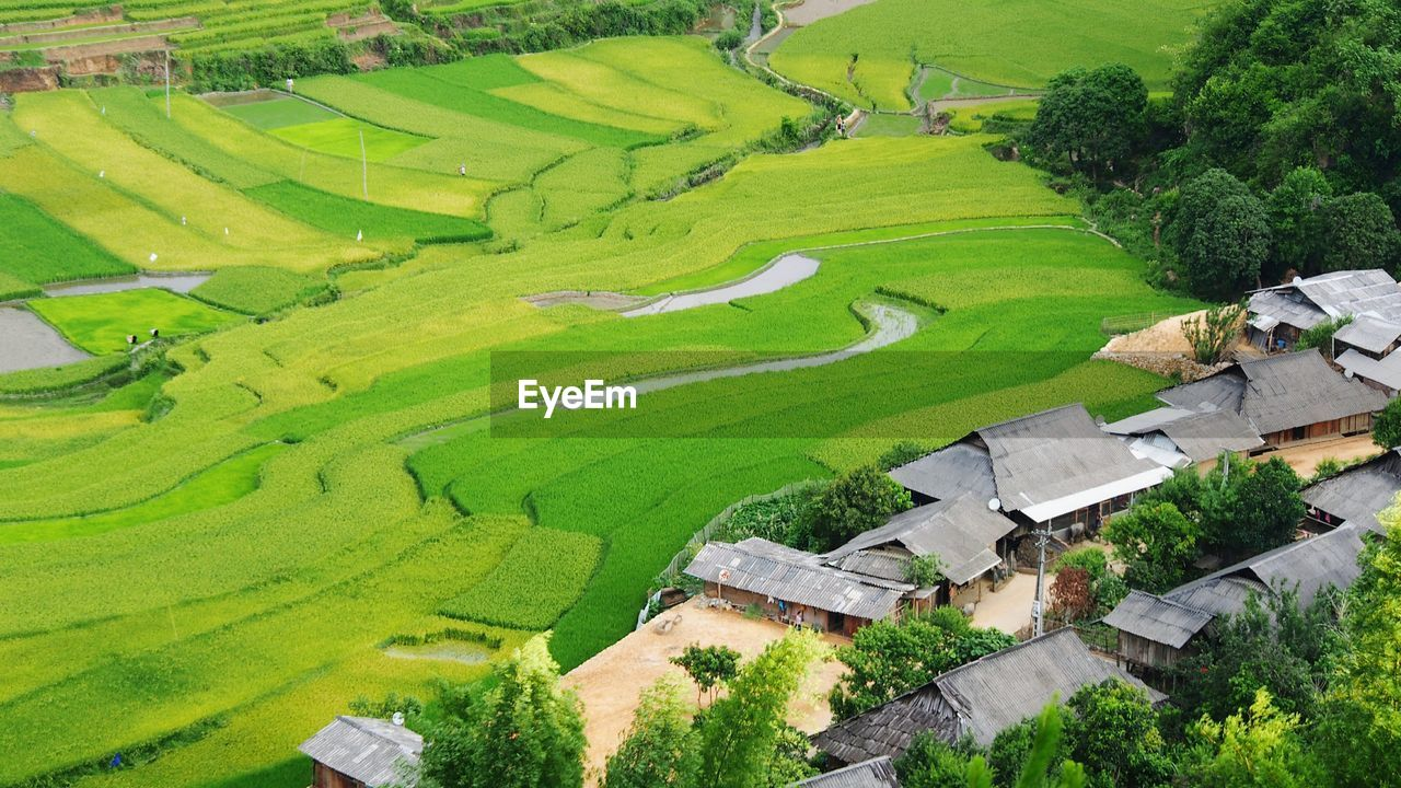 High Angle View Of Houses By Agricultural Field