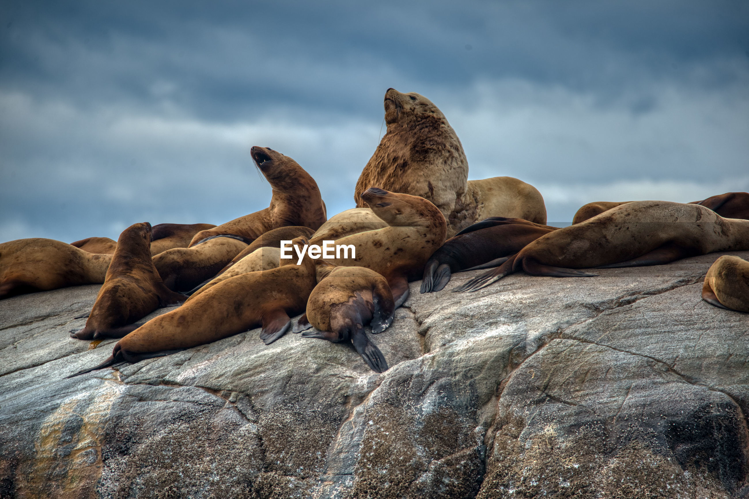 View of sea lion on rock