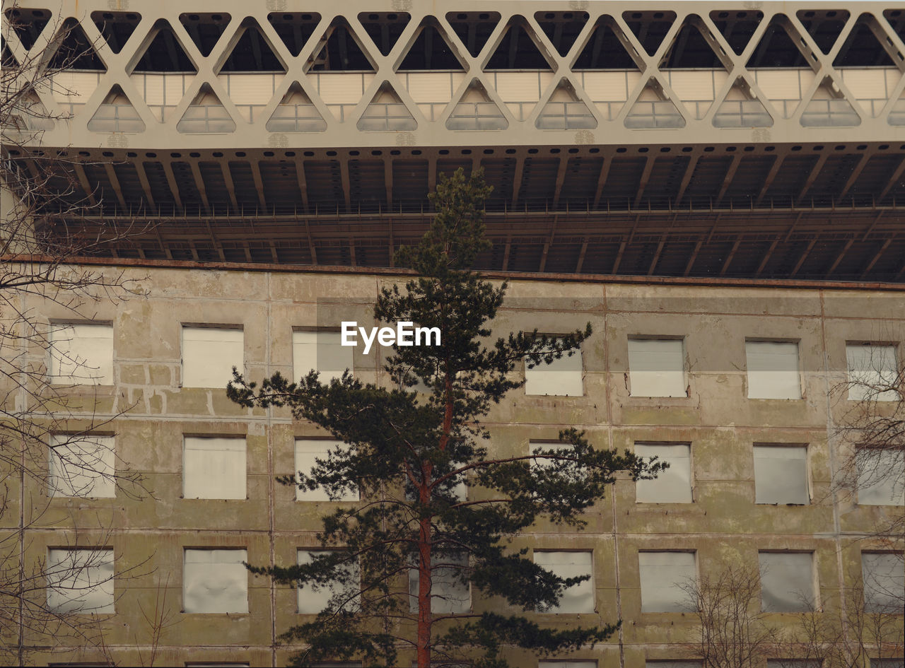 LOW ANGLE VIEW OF TREE AND BUILDING