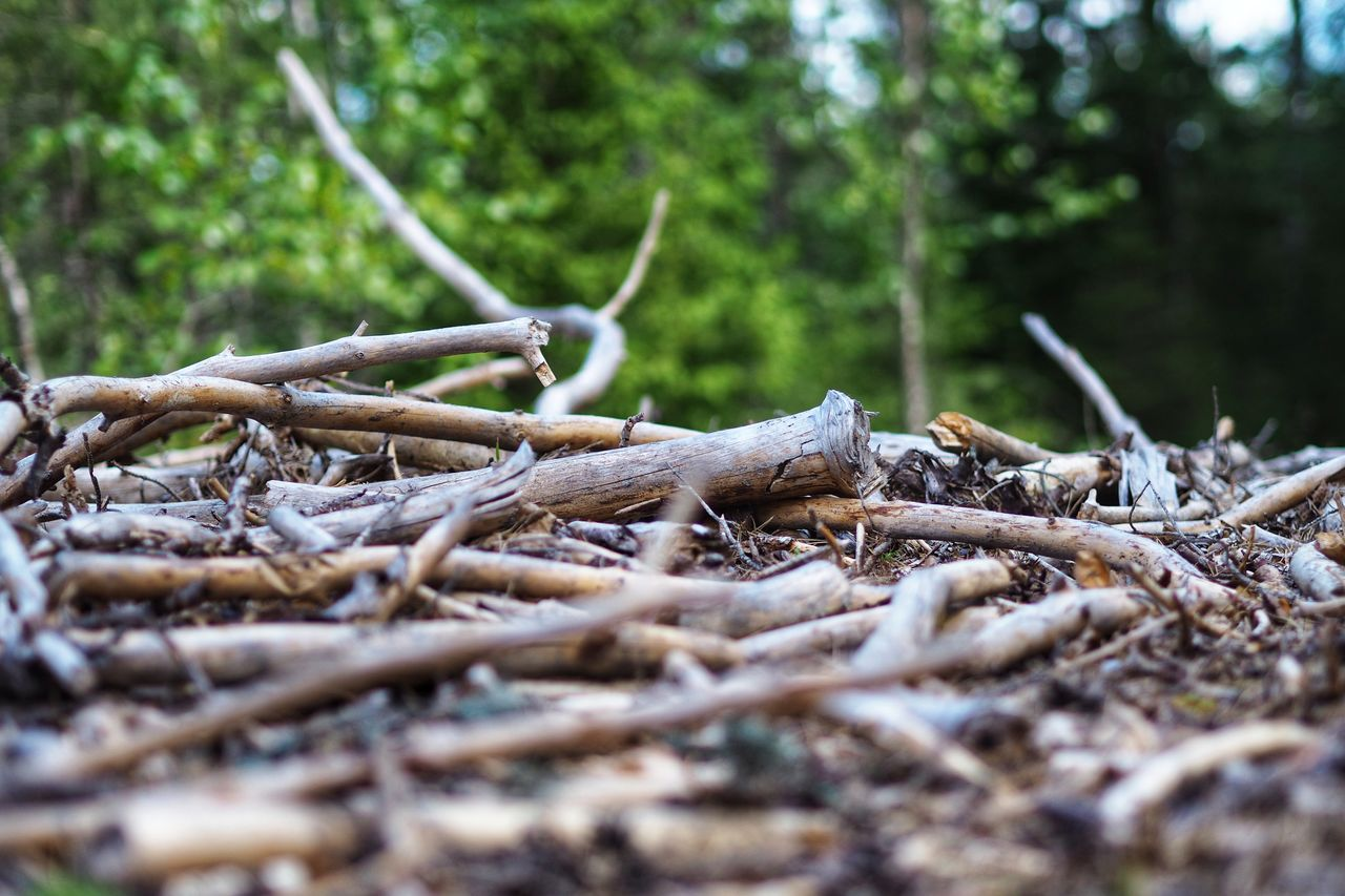 tree, plant, forest, land, nature, selective focus, no people, root, day, wood - material, tranquility, tree trunk, falling, growth, trunk, plant part, outdoors, dry, branch, beauty in nature, wood, surface level, stick - plant part, woodland, dead plant, driftwood