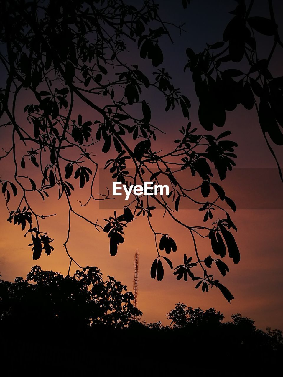 silhouette, plant, tree, sky, sunset, beauty in nature, growth, nature, scenics - nature, tranquility, no people, low angle view, plant part, tranquil scene, leaf, branch, outdoors, orange color, night, idyllic