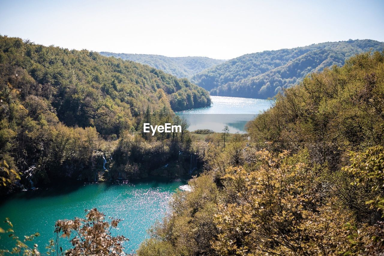 HIGH ANGLE VIEW OF LAKE BY TREES IN FOREST