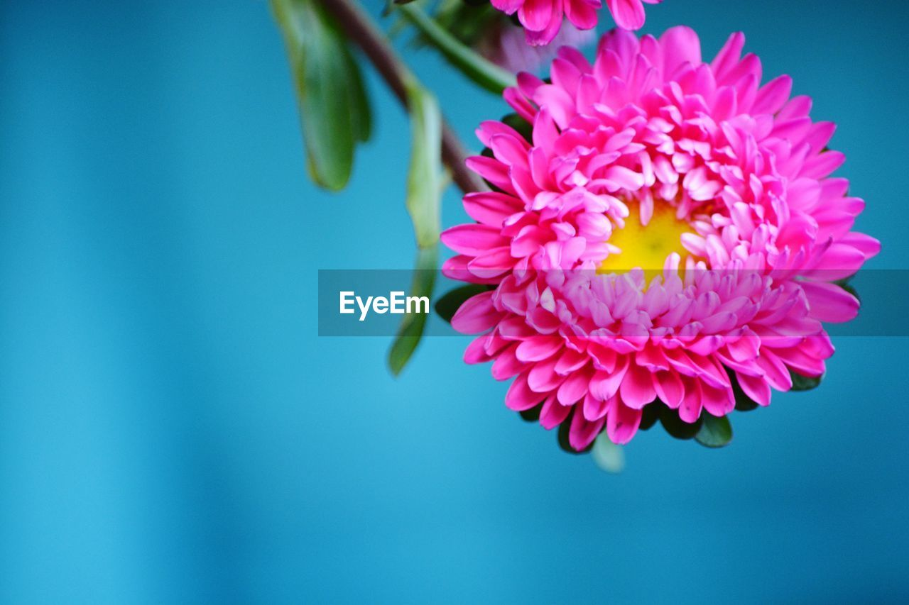 flower, beauty in nature, nature, petal, fragility, freshness, flower head, no people, growth, blooming, pink color, close-up, outdoors, day