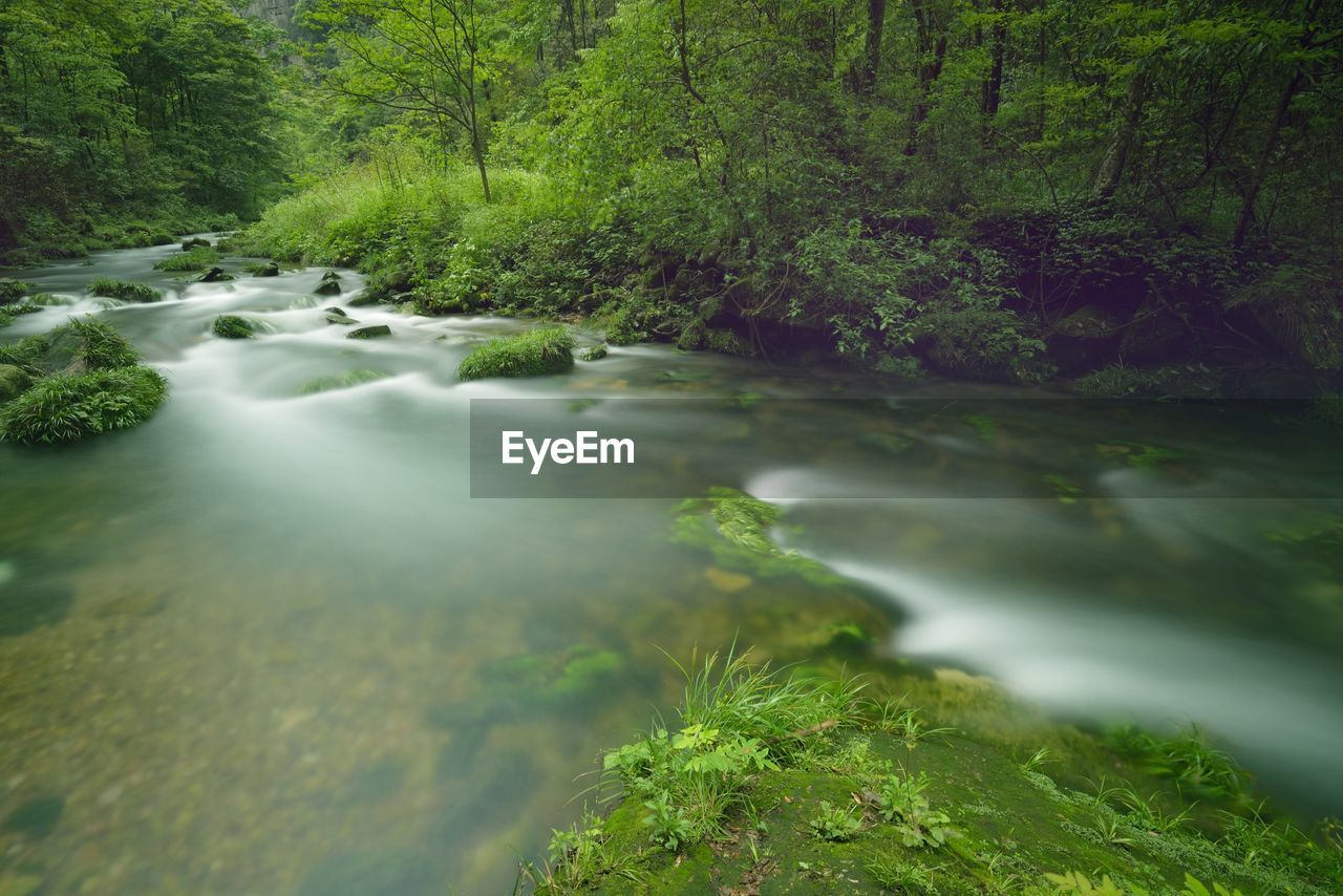 water, tree, plant, forest, beauty in nature, scenics - nature, flowing, flowing water, long exposure, nature, motion, land, no people, river, blurred motion, green color, day, growth, environment, outdoors, stream - flowing water, rainforest, power in nature