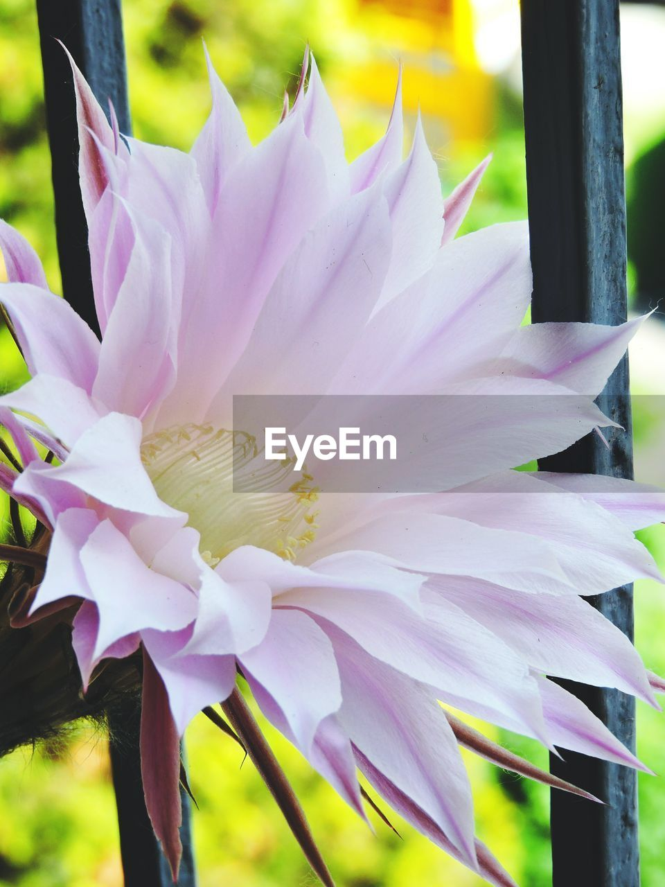 flower, petal, fragility, beauty in nature, flower head, nature, growth, close-up, no people, day, freshness, outdoors, plant, blooming