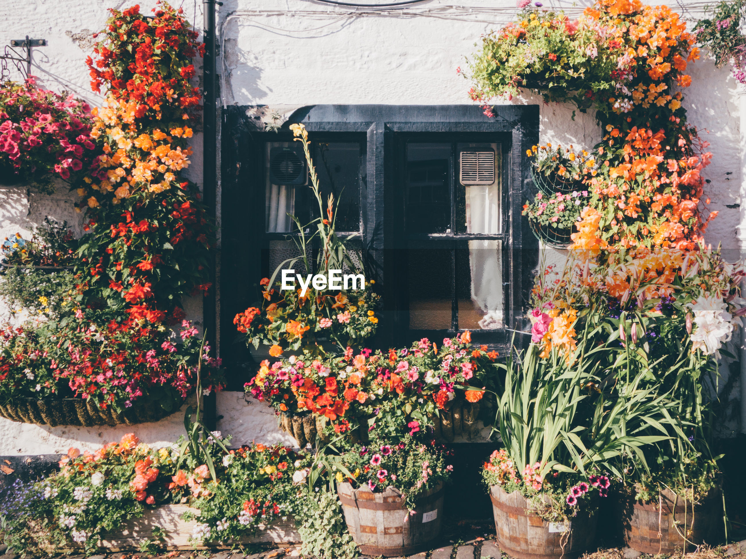 Flower pots outside house