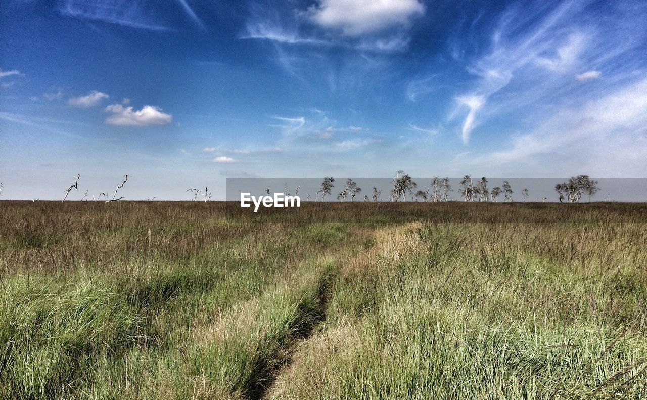 sky, grass, field, landscape, nature, tranquil scene, cloud - sky, tranquility, scenics, no people, day, outdoors, beauty in nature, growth