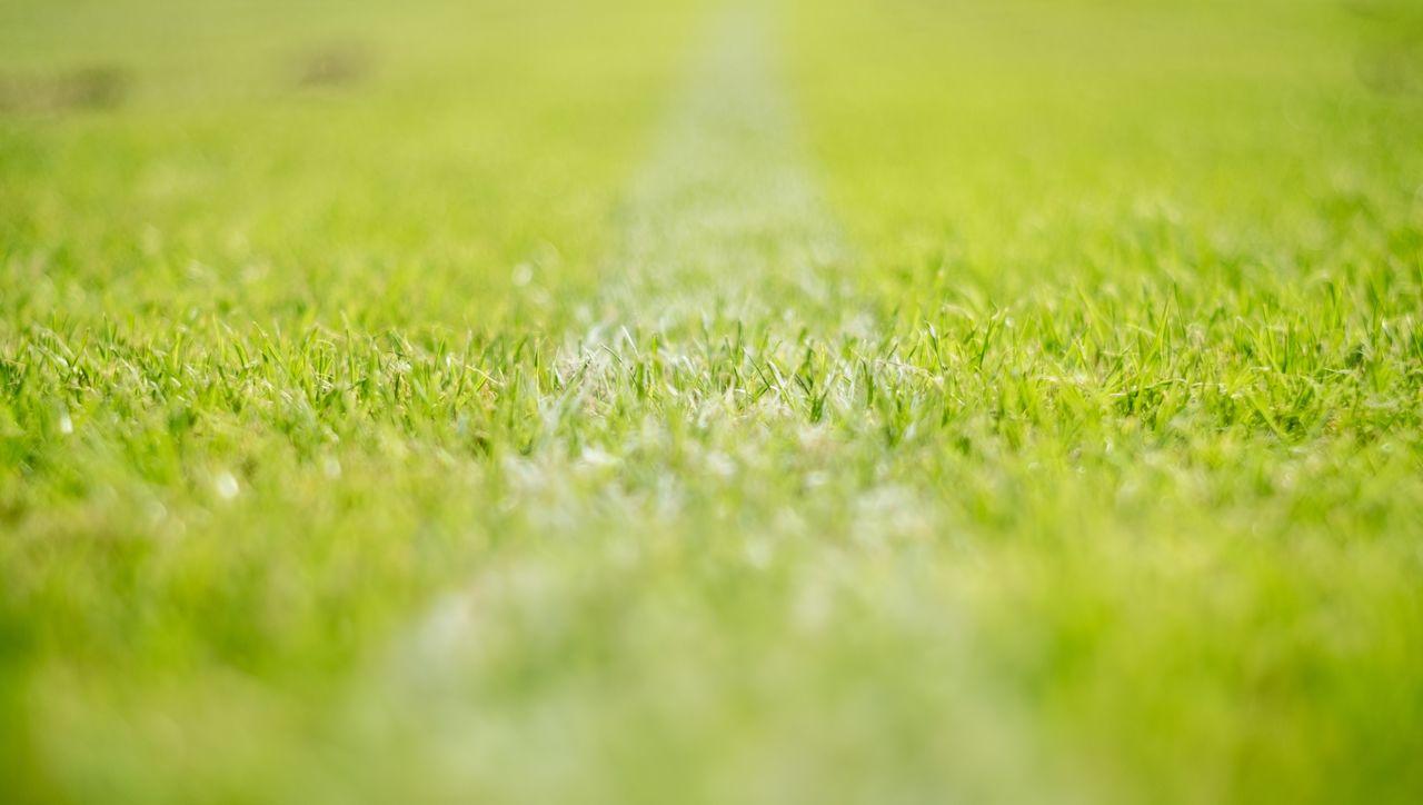 CLOSE-UP OF GRASSLAND