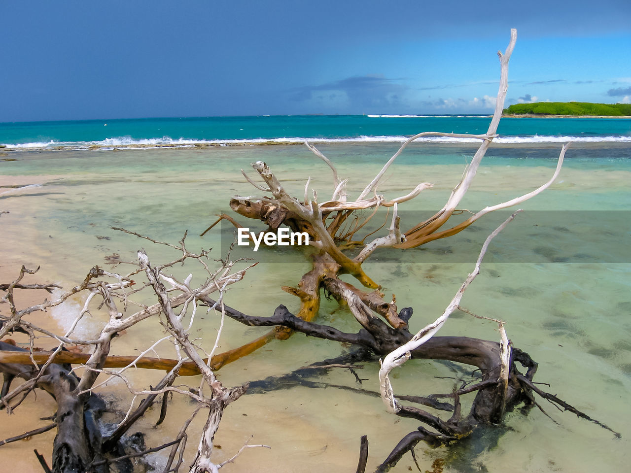 water, sea, land, beach, beauty in nature, horizon over water, horizon, sky, nature, tranquility, scenics - nature, plant, day, tranquil scene, no people, non-urban scene, dead plant, tree, remote, outdoors, driftwood