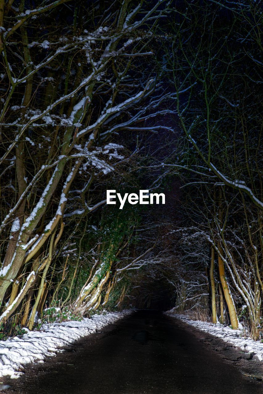 night, nature, outdoors, forest, no people, tranquility, tree, winter, landscape, snow, scenics, beauty in nature, close-up