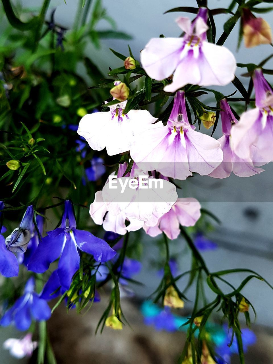 flowering plant, flower, plant, beauty in nature, freshness, fragility, petal, growth, vulnerability, close-up, flower head, inflorescence, nature, purple, no people, day, tree, focus on foreground, botany, branch, outdoors, pollen, springtime