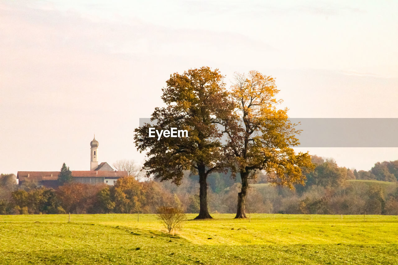 plant, tree, sky, grass, nature, field, architecture, beauty in nature, landscape, built structure, land, autumn, environment, scenics - nature, building exterior, tranquil scene, green color, tranquility, growth, no people, outdoors, change
