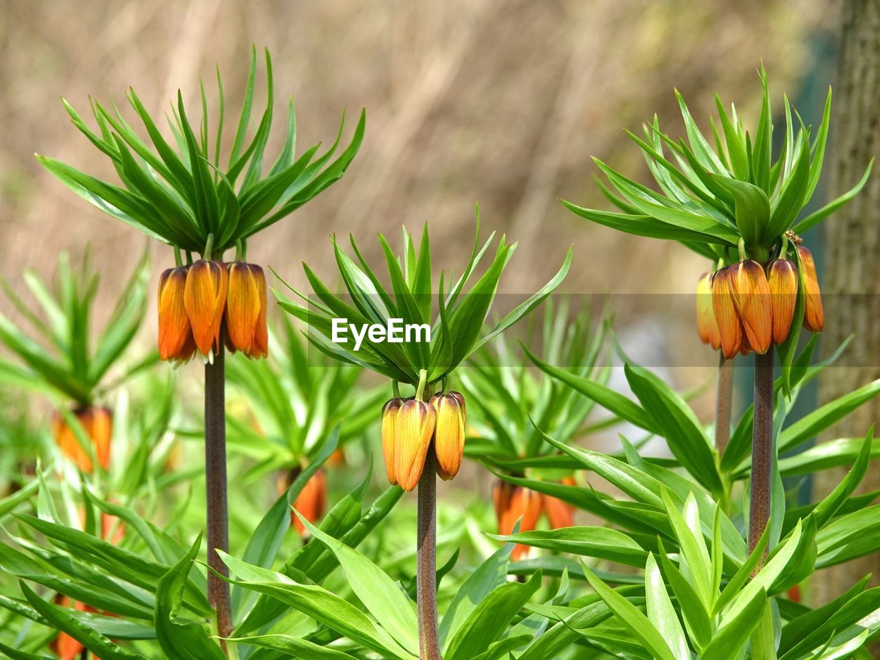plant, freshness, growth, flower, flowering plant, close-up, beauty in nature, leaf, plant part, nature, green color, orange color, flower head, petal, no people, fragility, focus on foreground, inflorescence, vulnerability, day, outdoors