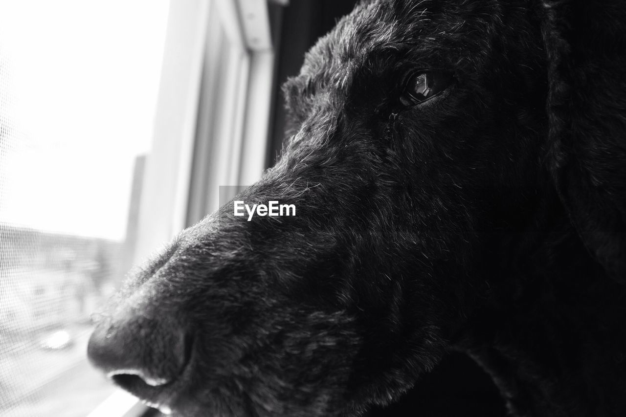 dog, pets, one animal, domestic animals, mammal, animal themes, animal head, close-up, indoors, no people, day