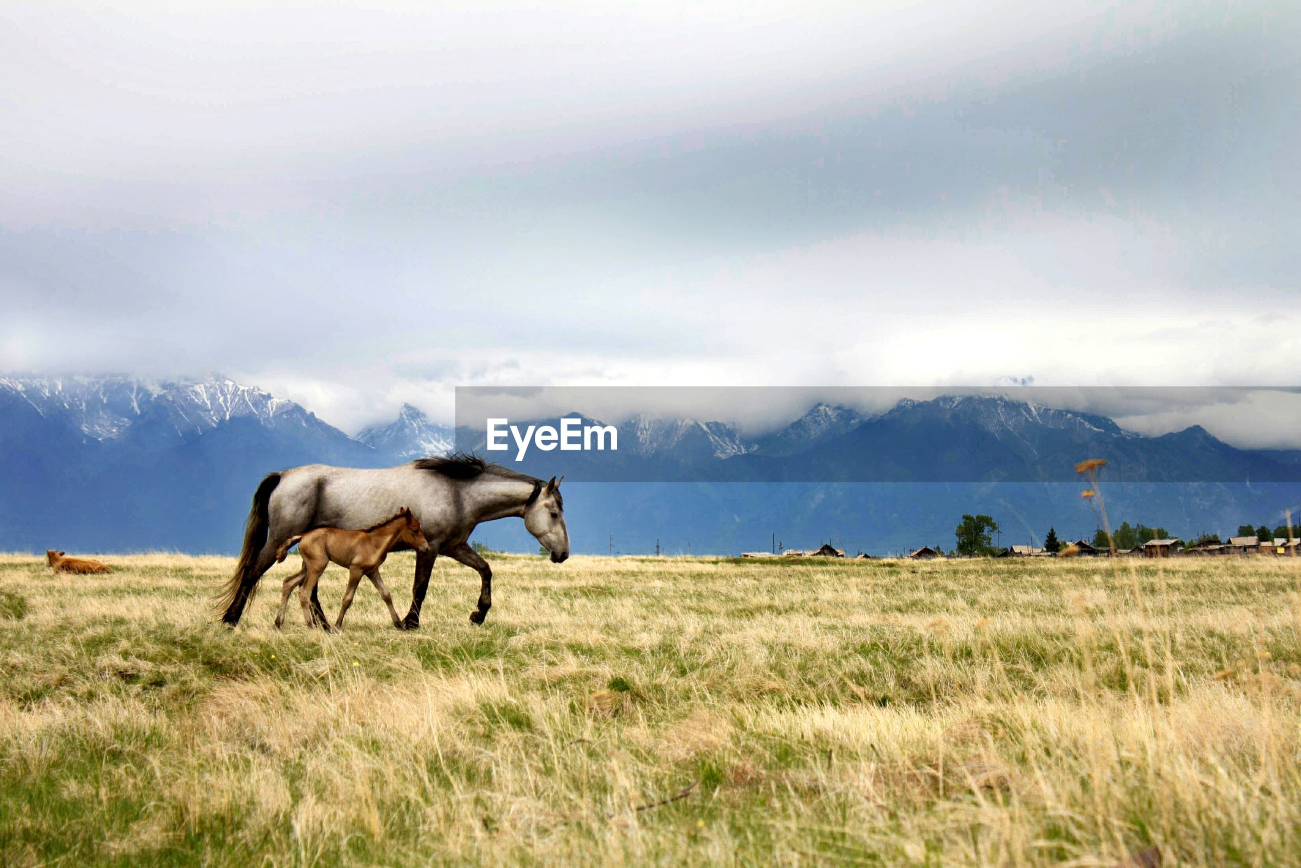 SIDE VIEW OF HORSE ON FIELD AGAINST MOUNTAIN