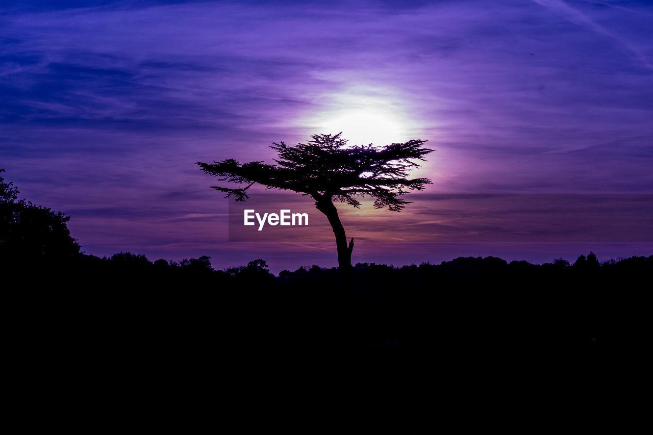 SILHOUETTE TREE ON LANDSCAPE AGAINST SUNSET SKY