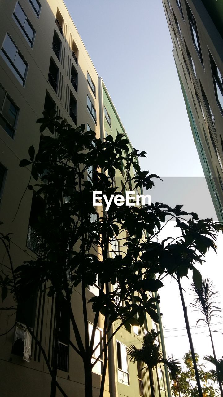 building exterior, architecture, low angle view, built structure, tree, palm tree, window, growth, no people, clear sky, day, leaf, outdoors, plant, sky, city, nature, close-up