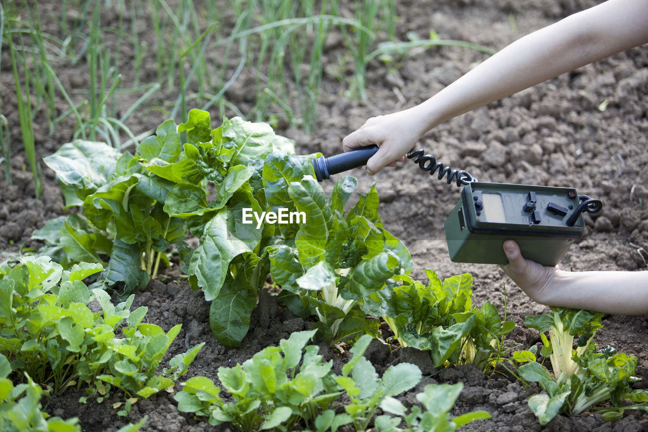 Cropped hand of person holding machine by plant
