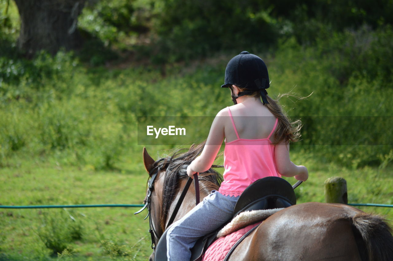 horse, domestic animals, mammal, animal themes, one animal, working animal, horseback riding, rear view, herbivorous, riding, one person, real people, livestock, leisure activity, sitting, casual clothing, outdoors, day, lifestyles, focus on foreground, pets, nature, grass, people