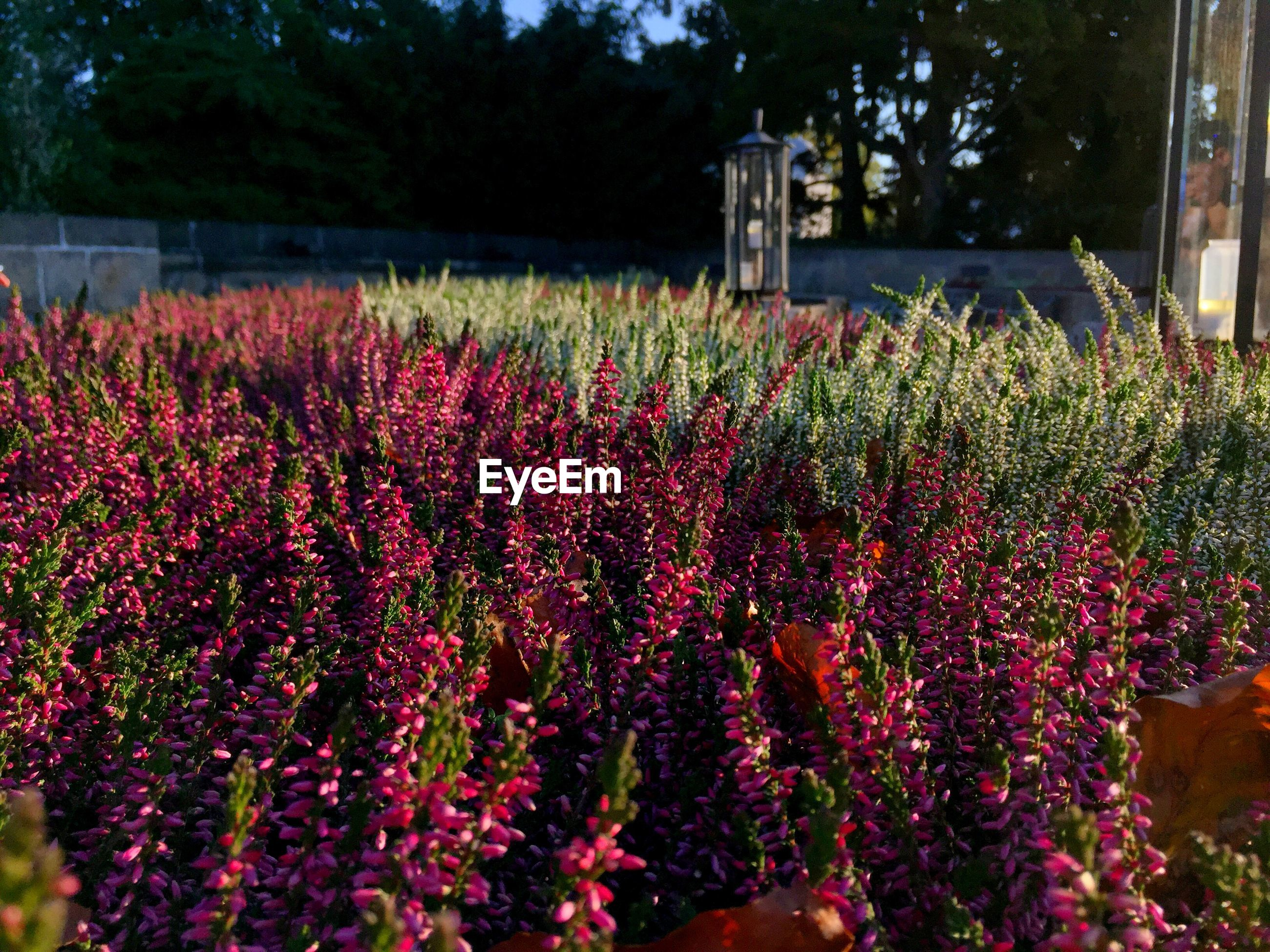RED FLOWERING PLANTS ON LAND