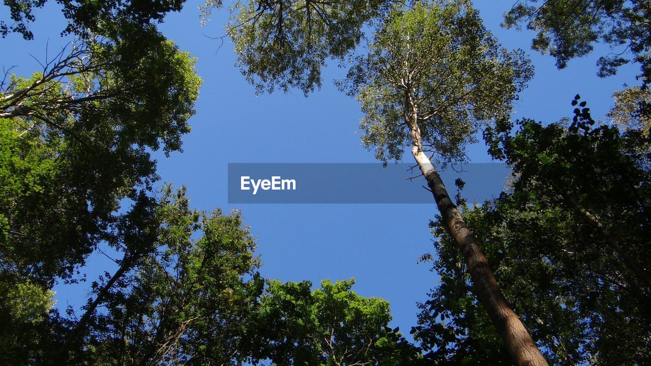 tree, blue sky, nature, low angle view, clear sky, day, adventure, growth, sunshine, beauty in nature, hope, no people, outdoors