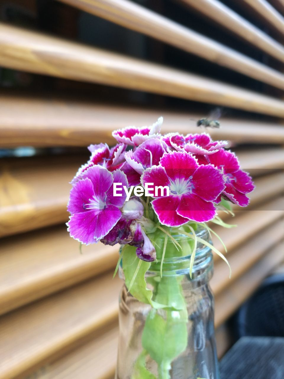 flower, flowering plant, freshness, vulnerability, fragility, beauty in nature, plant, close-up, petal, pink color, flower head, inflorescence, nature, vase, focus on foreground, no people, indoors, purple, wood - material, table, softness, flower arrangement