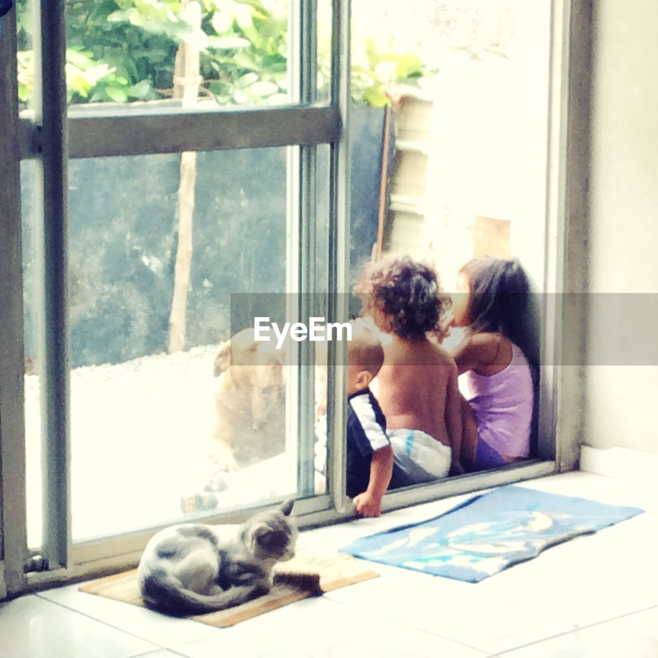 dog, pets, domestic animals, technology, one animal, indoors, window, real people, animal themes, looking through window, wireless technology, friendship, casual clothing, sitting, mammal, bonding, day, home interior, relaxation, one person, young adult, people
