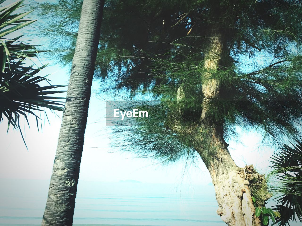tree, tree trunk, palm tree, nature, growth, tranquility, low angle view, beauty in nature, day, no people, outdoors, tranquil scene, branch, scenics, sky, close-up