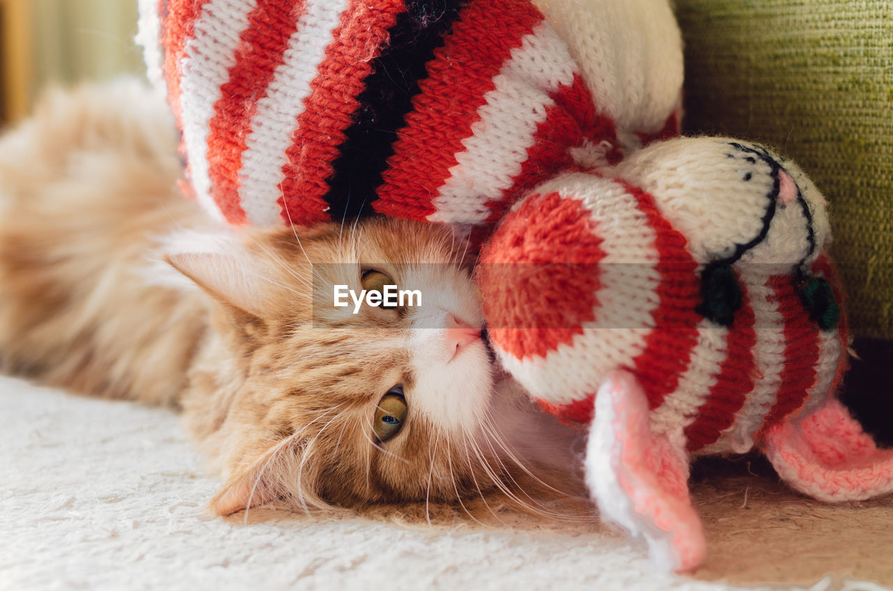 animal, mammal, domestic animals, animal themes, domestic, pets, one animal, vertebrate, hat, close-up, feline, cat, indoors, domestic cat, no people, santa hat, focus on foreground, portrait, whisker, red, animal head