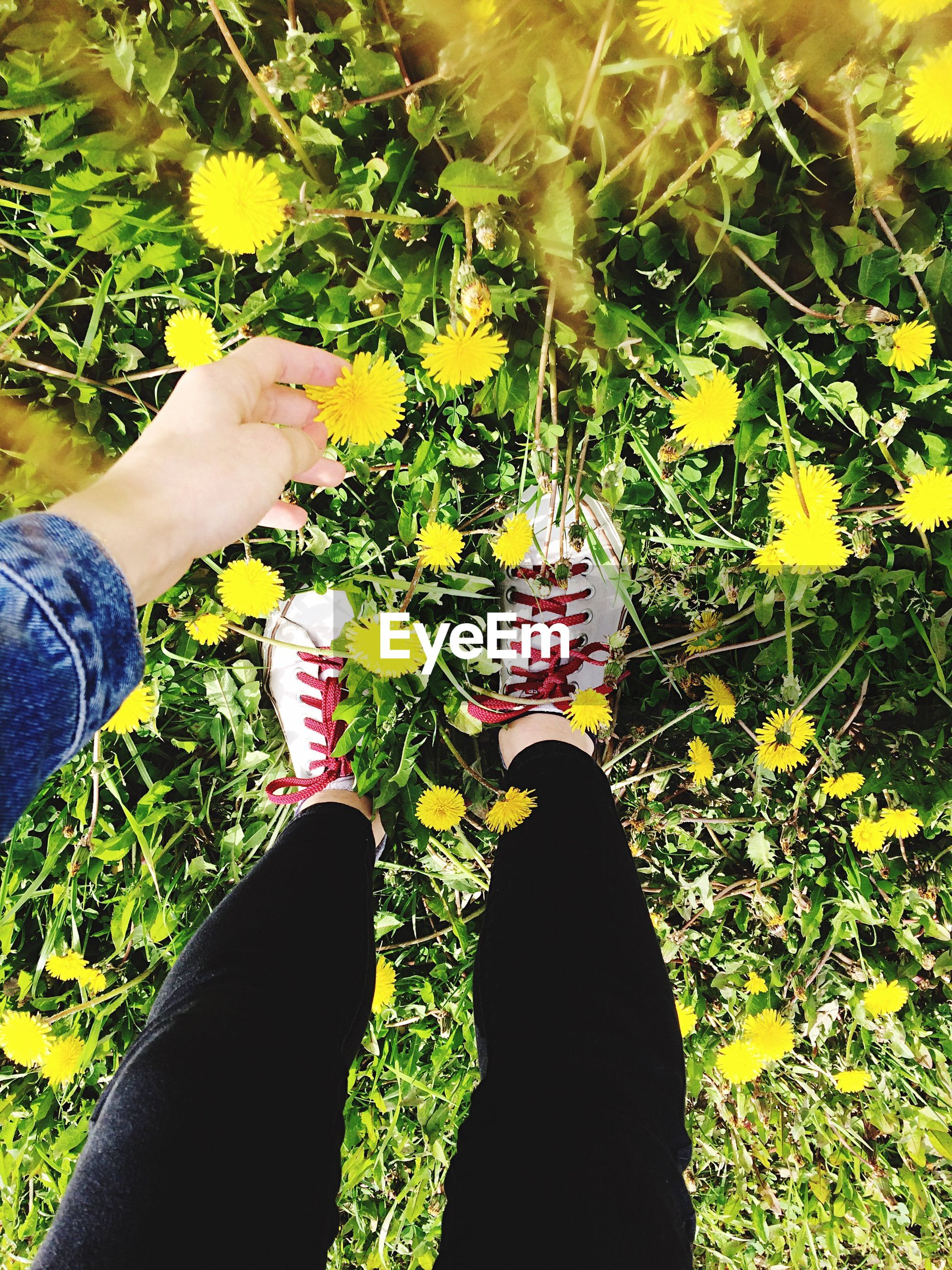human body part, plant, nature, real people, growth, holding, human hand, flower, food and drink, freshness, two people, human leg, day, low section, grass, outdoors, food, women, leaf, beauty in nature, healthy eating, togetherness, men, fragility, close-up, flower head, people
