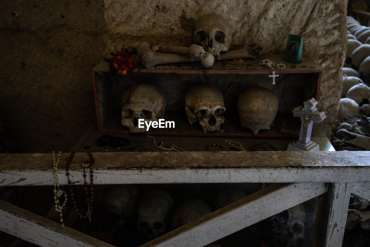 bone, indoors, human skull, human bone, human skeleton, mammal, skull, animal, shelf, domestic animals, animal themes, wood - material, animal body part, spooky, skeleton, domestic, pets