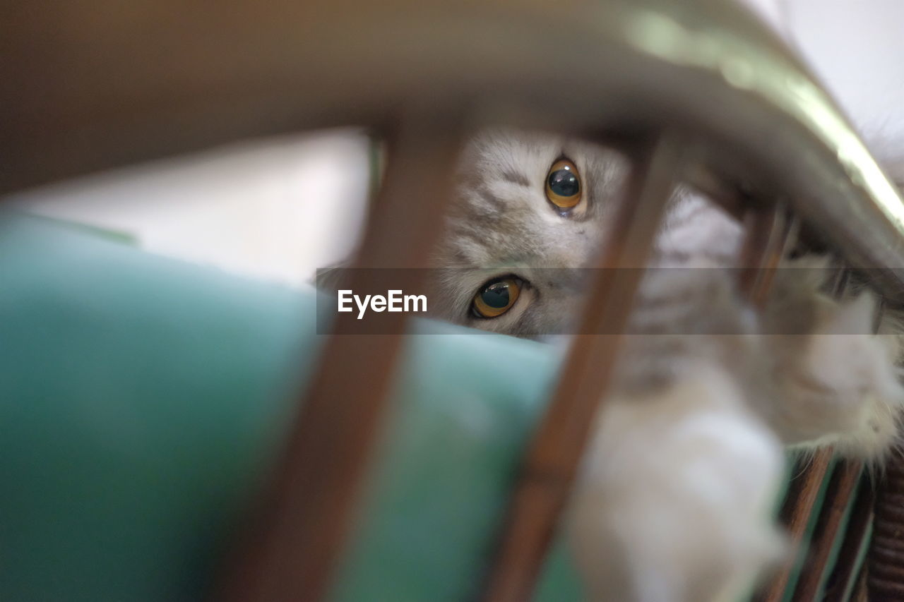 selective focus, one animal, animal themes, domestic animals, close-up, no people, indoors, mammal, pets, portrait, day, eyeball
