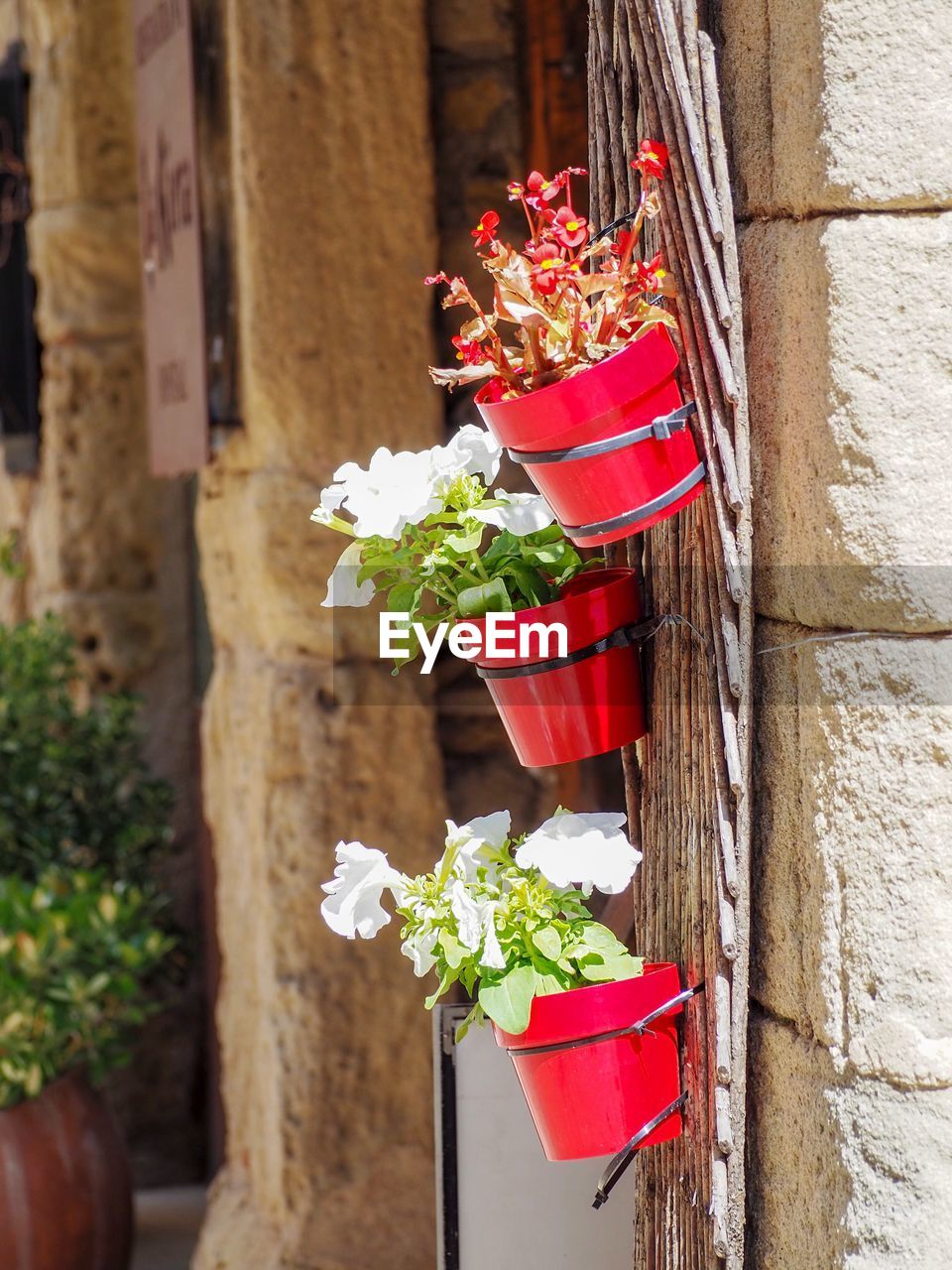 plant, flower, flowering plant, nature, freshness, red, potted plant, no people, day, built structure, vulnerability, fragility, architecture, beauty in nature, close-up, focus on foreground, growth, wall - building feature, container, decoration, outdoors, flower pot, flower head, window box