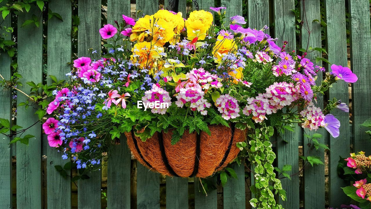 flowering plant, flower, plant, freshness, vulnerability, beauty in nature, fragility, pink color, nature, day, growth, multi colored, flower head, close-up, inflorescence, no people, petal, boundary, fence, potted plant, outdoors, flower pot, purple, flower arrangement